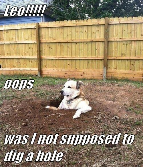 Leo!!!!! oops was I not supposed to dig a hole