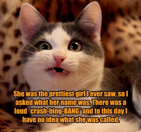 Cats,name,pretty