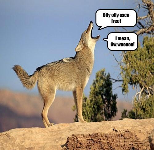 hide and seek wolf - 8495828480