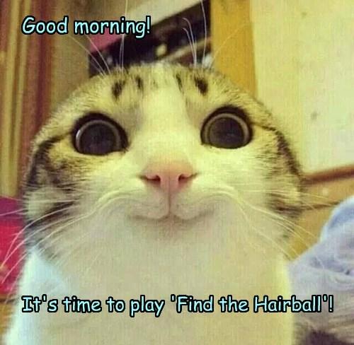 hairball Cats - 8495838464