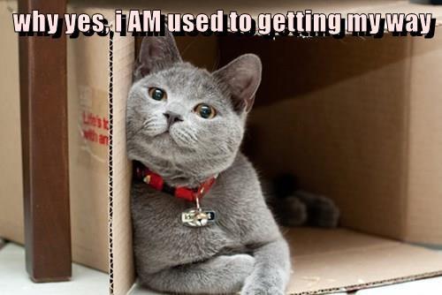 animals cat my way box - 8495848960
