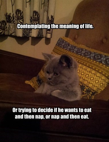 cat life thoughts - 8495860480