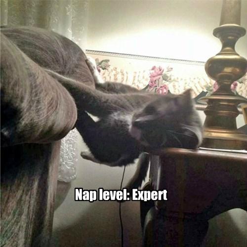 expert,nap,Cats