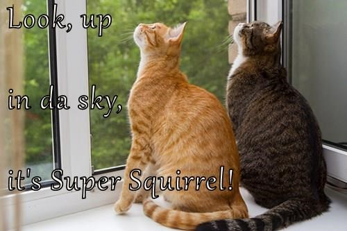 sky,squirrel,window watching,Cats