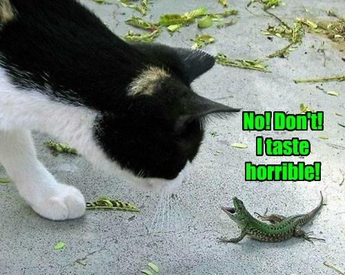 No! Don't! I taste horrible!