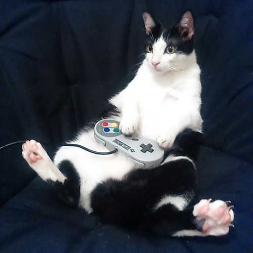 fat video games Cats - 8496134144