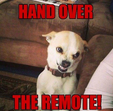 dogs,remote