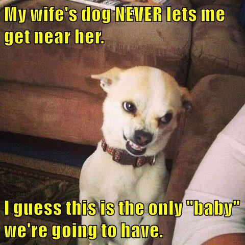 dogs,marriage,baby,wife