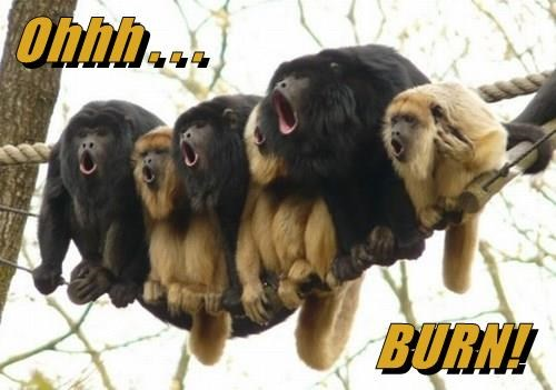animals monkeys captions funny - 8497599488