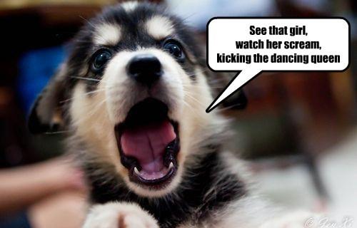 dogs,lyrics,abba