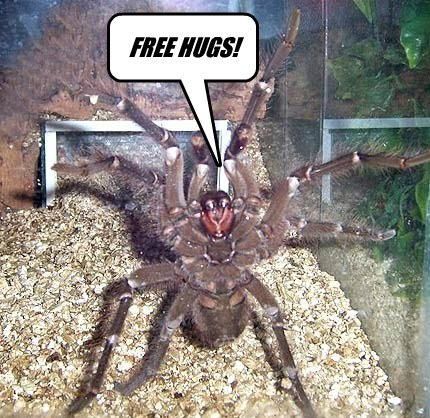 spider,captions,funny
