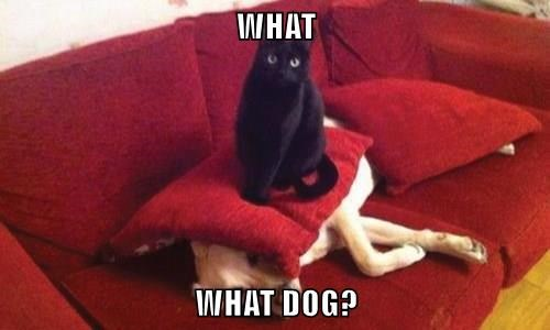 animals dogs captions Cats funny - 8497943296