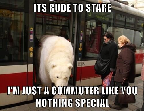 animals captions bear funny - 8497950464