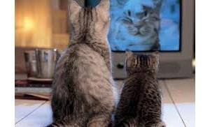 Watching Animal Planet