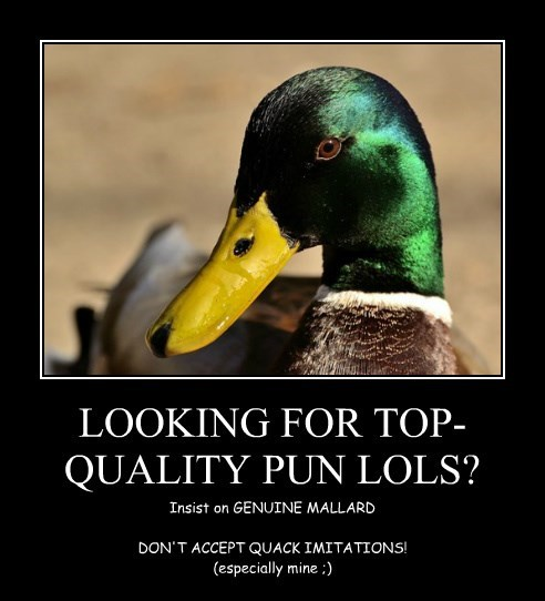 LOOKING FOR TOP-QUALITY PUN LOLS?