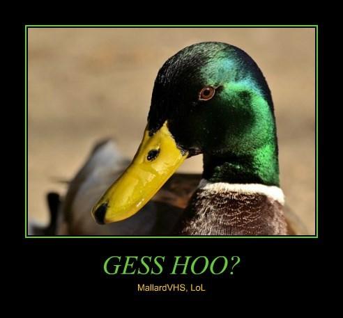 GESS HOO?