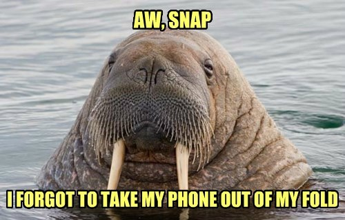 water,phone,walrus