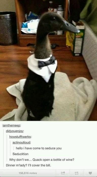 funny-tumblr-pic-duck-puns