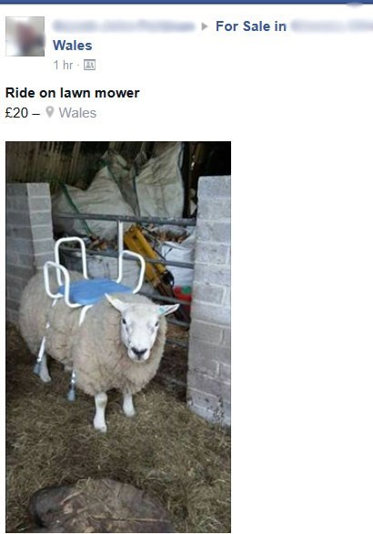 funny-facebook-fail-pic-for-sale-sheep-lawnmower