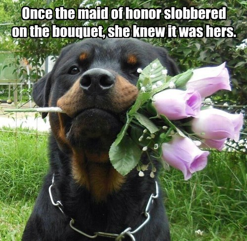 Funny meme of a dog with the bouquet of flowers in his mouth with a caption joking that she is the maid of honor.
