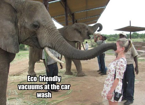 Working At The Car Wash Um Hum Animal Comedy Animal Comedy Funny Animals Animal Gifs