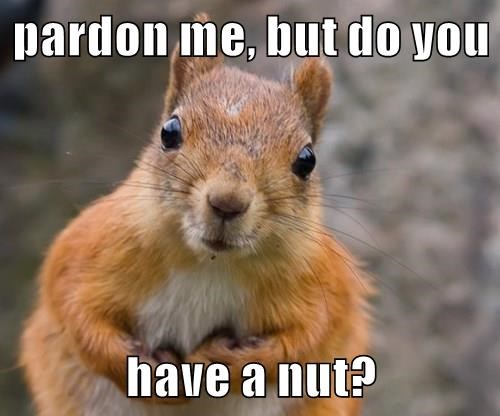 pardon me, but do you   have a nut?