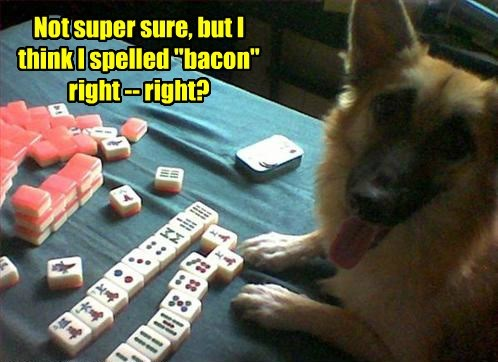 dogs,mahjong tiles,bacon