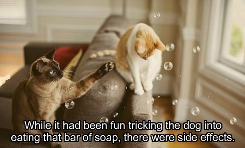 While it had been fun tricking the dog into eating that bar of soap, there were side effects.