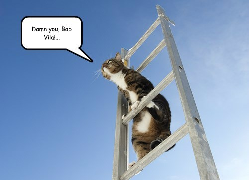 bob vila,cat,ladder