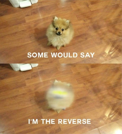 superheroes-flash-dc-reverse-flash-dog-is-cute-meme