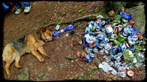 drinking hangover image It Was a Ruff Night