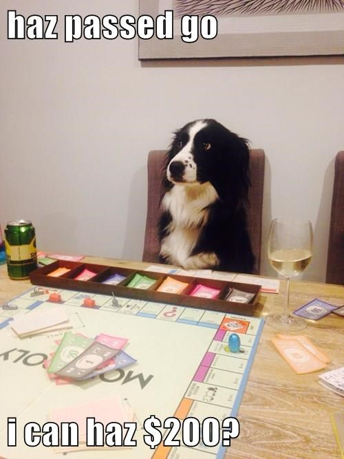 dogs,monopoly,board games