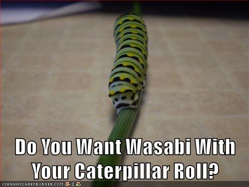 animals sushi puns food caterpillar - 8501667328