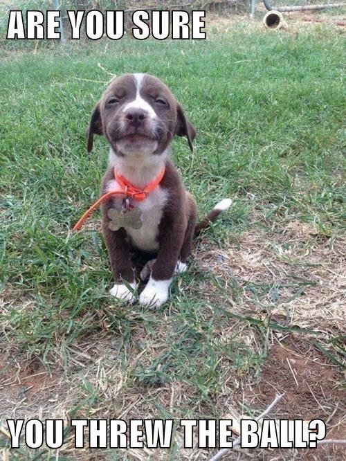 animals puppy ball - 8501846784