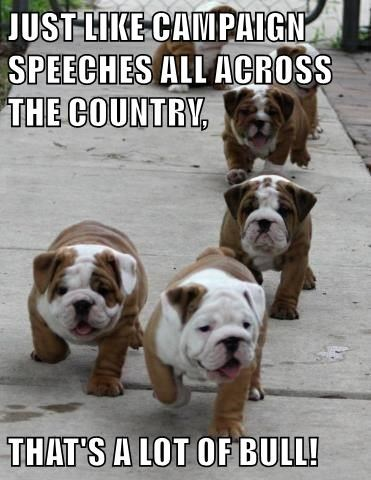 animals bulldog puppies cute