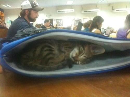 animals cat-laptop-bag - 8501888512