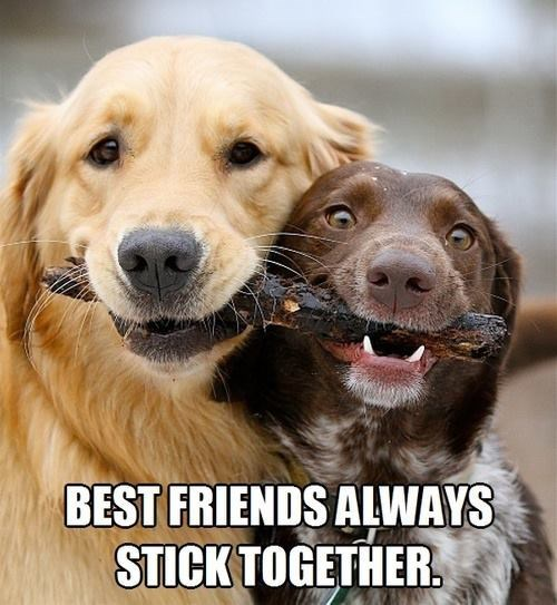 fetch stick dogs puns