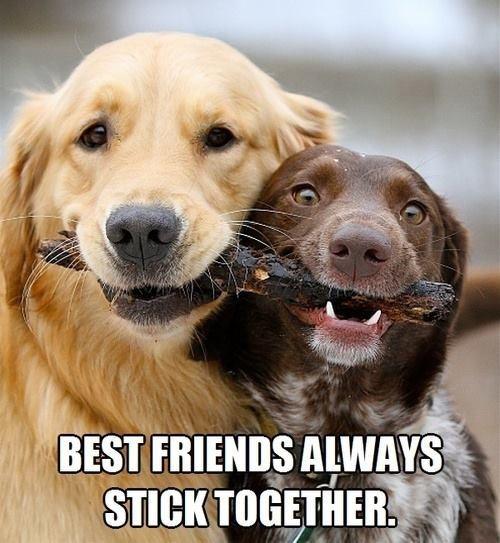 fetch stick puns - 8501907456