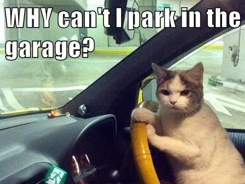 animals car garage Cats - 8501930240
