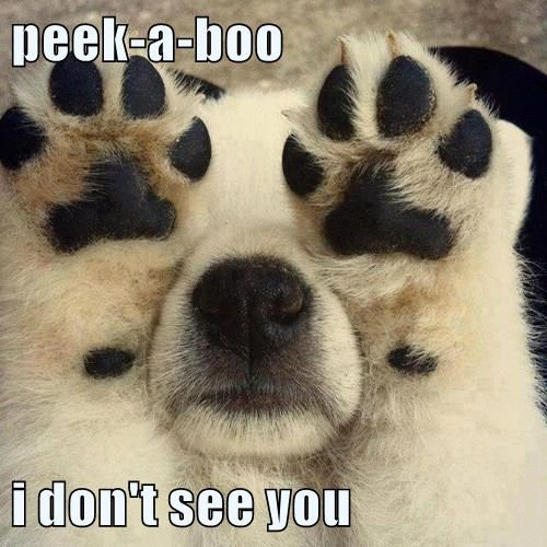 peek-a-boo i don't see you