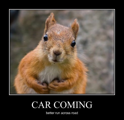 squirrel cars - 8502053376