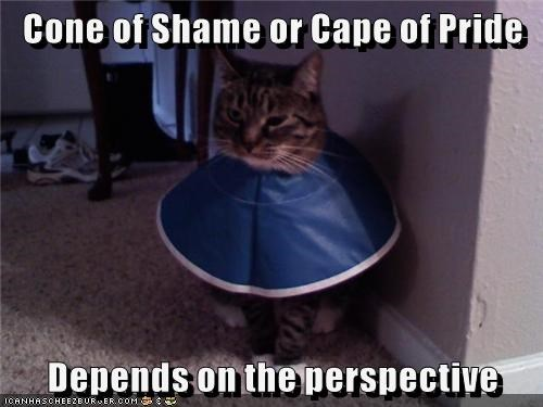 animals cape cone cat - 8502055424