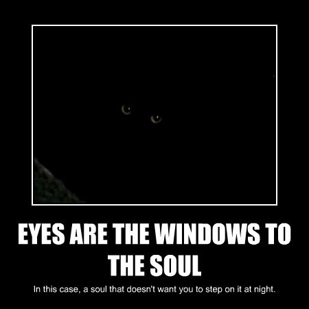 eyes Cats sleeping - 8502063872