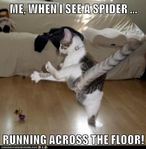 spiders,scared,Cats