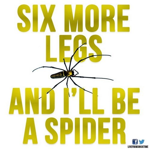 Text - SIX MORE LESS AND PLL BE A SPIDER LIVEFROMSNACKTIME