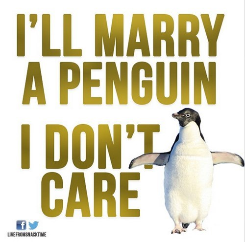 Penguin - I'LL MARRY A PENGUIN I DON'T CARE LIVEFROMSNACKTIME