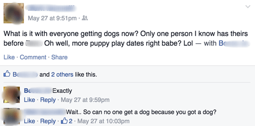 dogs drama pets copy - 8502091520