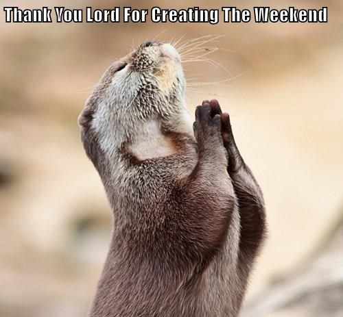 animals thank you otter weekend