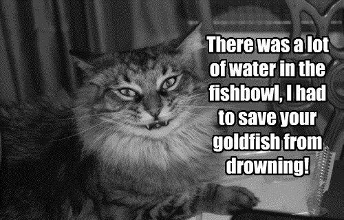 water fish Cats - 8502864384