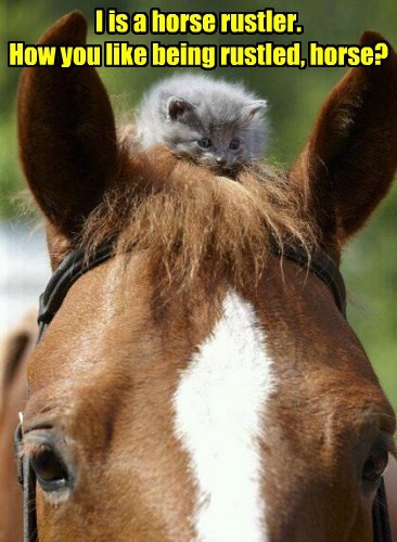 kitten Cats horse - 8502983936